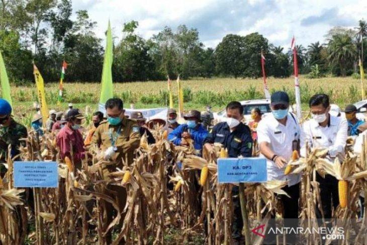 Desa Bange disiapkan jadi sentra jagung Kalbar
