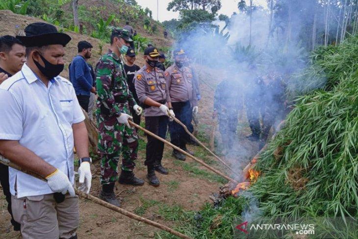 Musnahkan lima hektare ladang ganja, polisi tangkap seorang tersangka