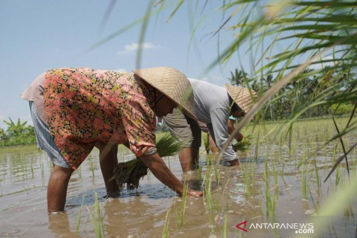 Riau allocates 30,000 hectares of land for food estate development