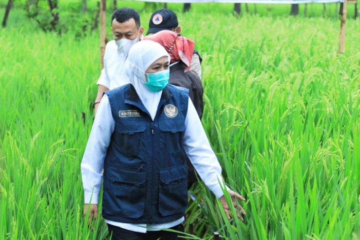 Disaksikan Gubernur Khofifah, Bupati Ponorogo luncurkan varietas bibit padi unggul KIP