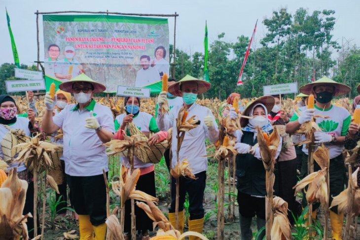 Perhutani-HKTI  panen raya jagung di Tuban