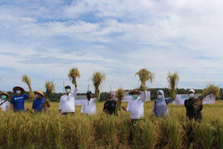 Intani dorong Provinsi Banten jadi produsen pangan nasional