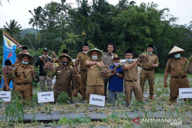 Bupati: Pengembangan bawang merah di Rejang Lebong menjanjikan