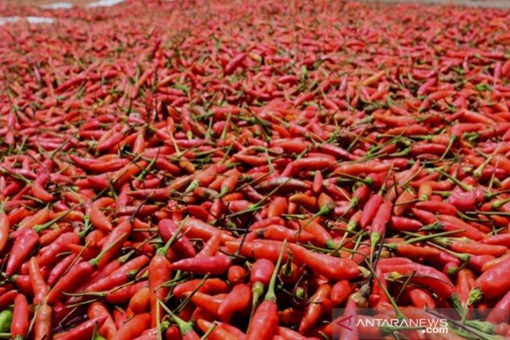 Hiyung bird's eye chili price soars to IDR130,000/kg