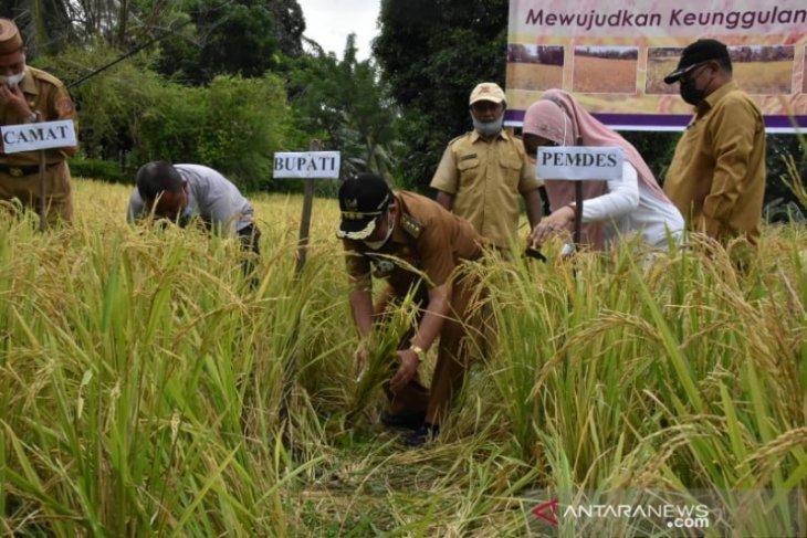 Bupati Gorontalo Utara panen raya padi ladang