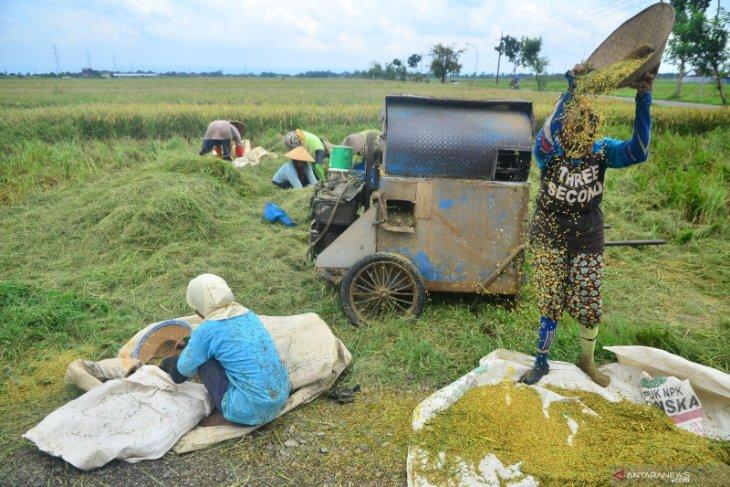 Dirut Bulog: Kami utamakan serap beras dalam negeri sebelum impor