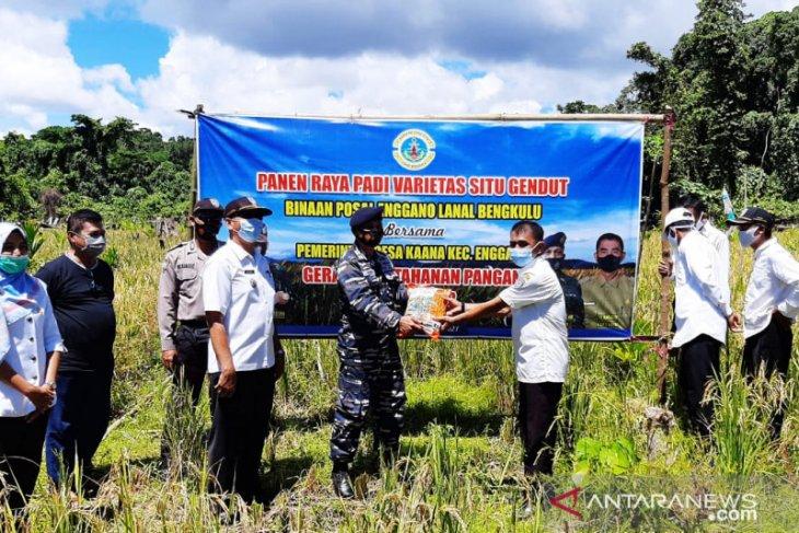 Lanal Bengkulu lakukan panen raya padi darat di Pulau Enggano