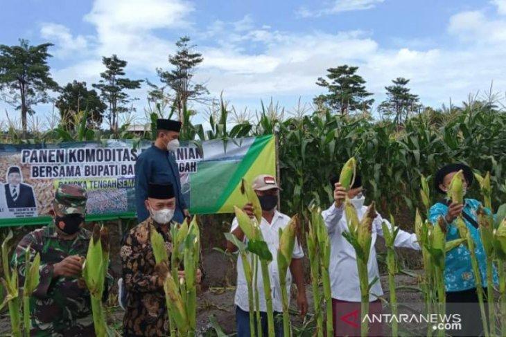 Poktan Karya Gemilang Bangka Tengah manfaatkan rawa menjadi lahan pertanian