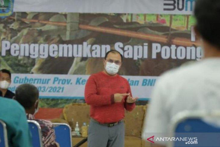 Bangka Belitung gencarkan penggemukan sapi di Belitung guna kurangi impor daging