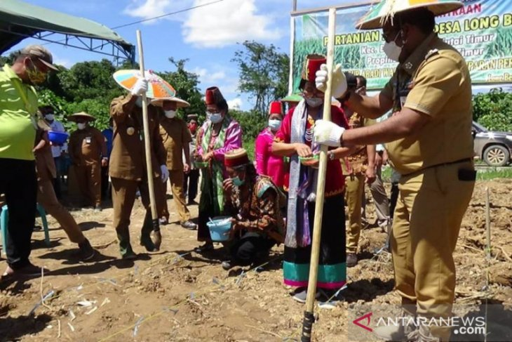PT SAWA tanam perdana jagung di Long Bentuq