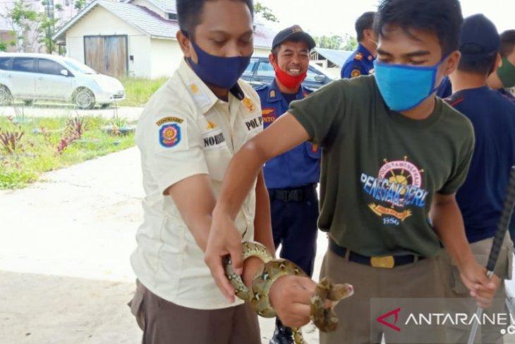 Damkar Satpol PP Landak gelar pelatihan menangkap ular