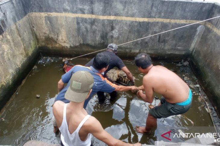 Petugas konservasi Wilayah III Singkawang evakuasi buaya milik warga