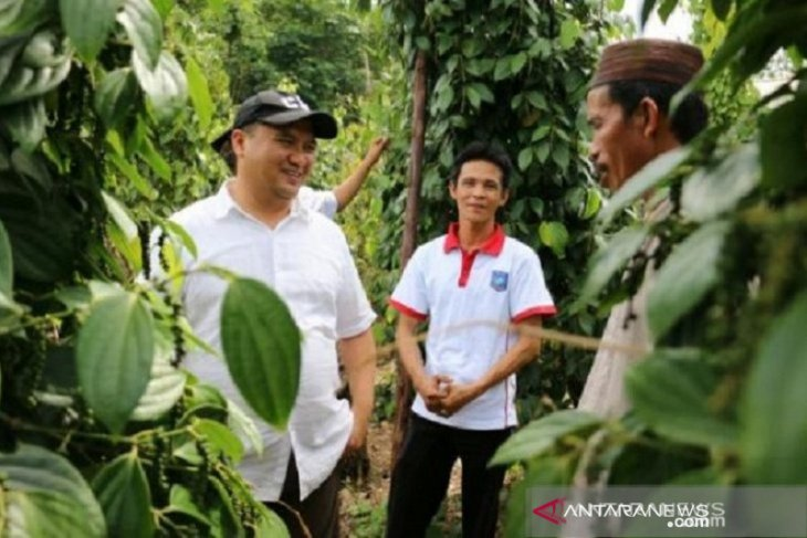 Indikasi Geografis picu harga lada putih di Bangka Belitung terus meningkat