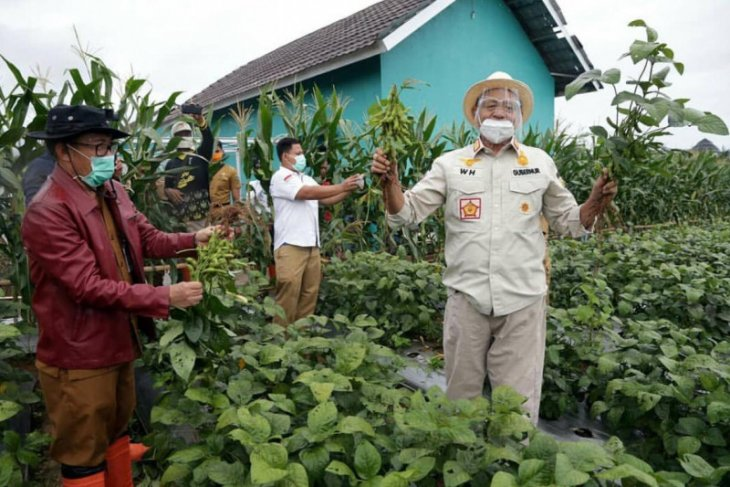 Pemprov Banten dorong peningkatan produksi kacang  kedelai lokal