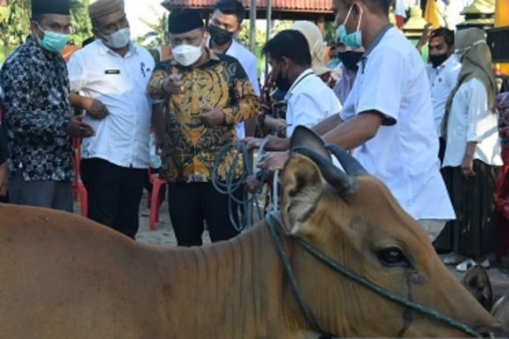 Pemkab Gorontalo salurkan bantuan sapi ternak