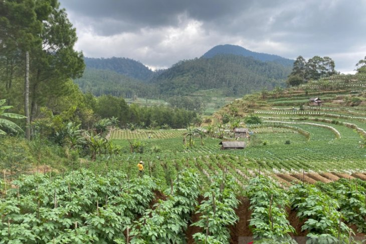FAO: Investasi dalam restorasi hutan bantu pulihkan kesehatan dan kesejahteraan