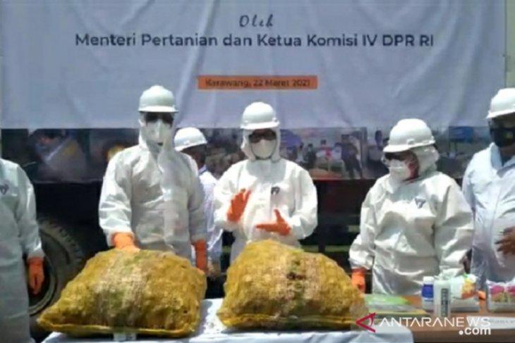 Indonesia cegah jahe impor dari sejumlah negara
