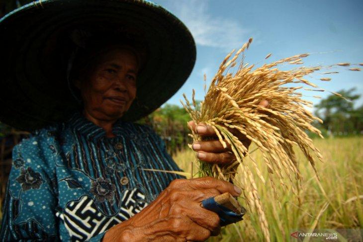 Kebijakan impor beras jangan korbankan petani