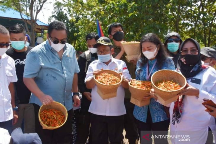 Rachmat Gobel panen komoditas hortikultura di Gorontalo Utara