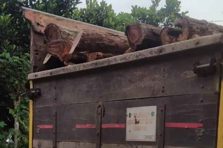 Warga gagalkan pengangkutan pohon sonokeling dari hutan Gua Pasir Tulungagung