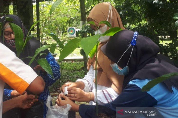 Indocement edukasi mitra binaanya bertani sistem vegetatif