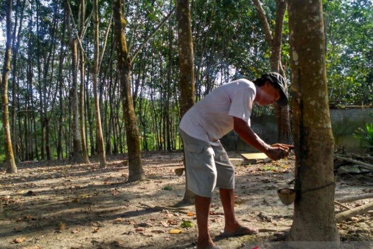 BI Jambi prediksi usaha pertanian membaik di awal 2021