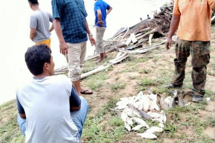 Sungai Batang Serangan Langkat tercemar, ribuan ikan mabuk dan mati