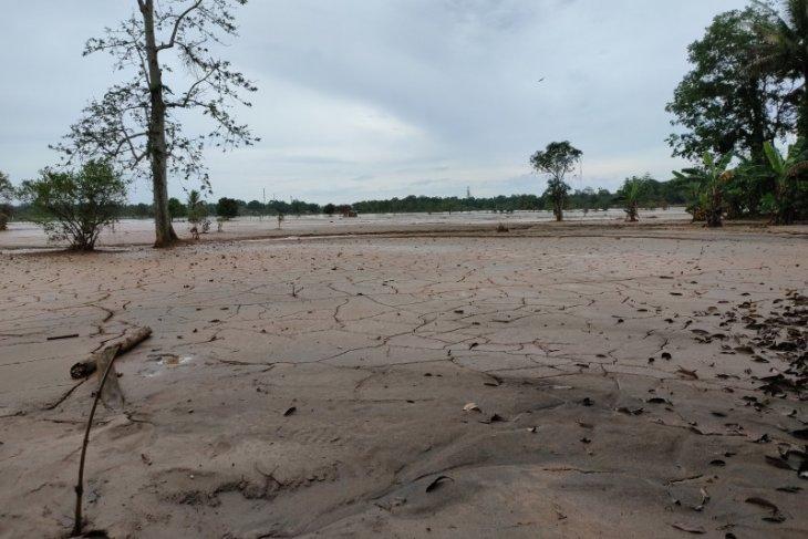 Persawahan di Kalsel banyak rusak karena bencana banjir