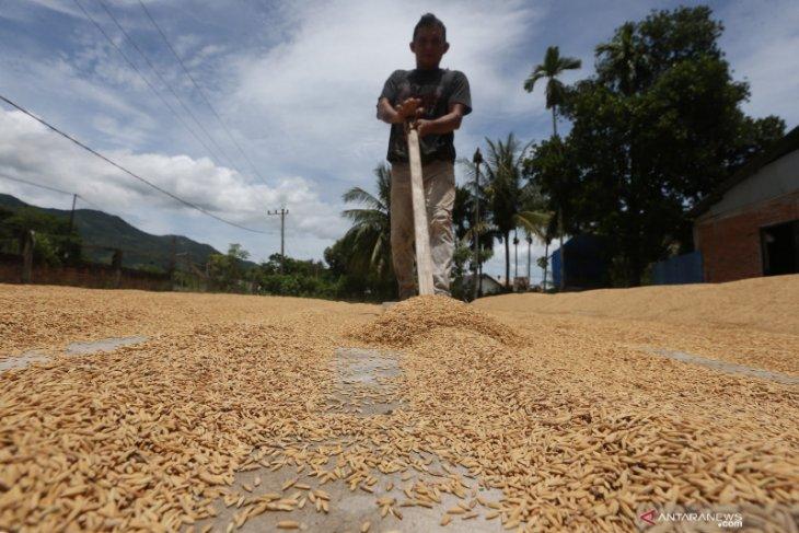 Kisah inspiratif setitik asa petani Aceh Besar saat pandemi