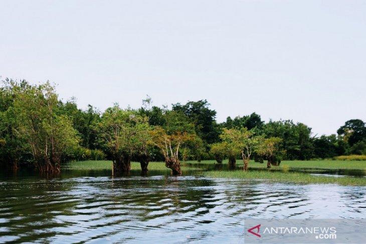 Keindahan Pantai Tlepuk Gondoruso Lumajang dikelilingi bonsai alami