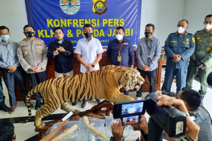 KLHK dan Polda Jambi tangkap penjual opsetan Harimau Sumatera