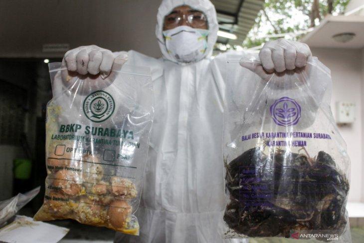 Ratusan burung dimusnahkan karena terinfeksi Avian Influenza