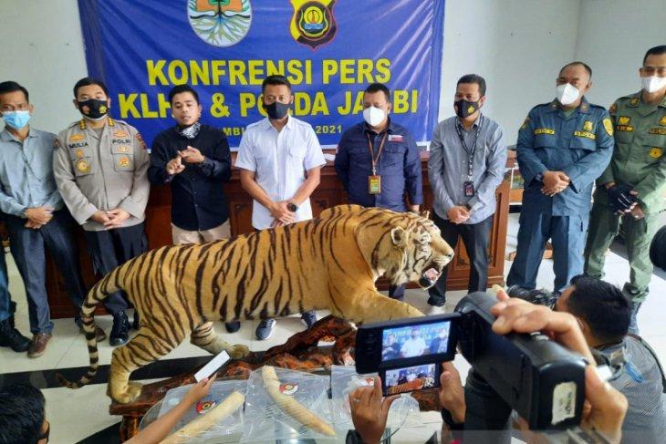KLHK sebut Populasi harimau dan gajah mengkhawatirkan akibat perburuan liar