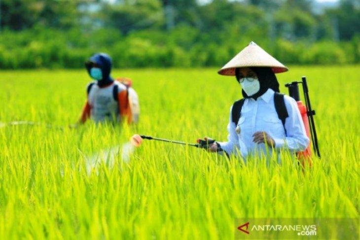 Kayong Utara salurkan dua ribu ton pupuk subsidi