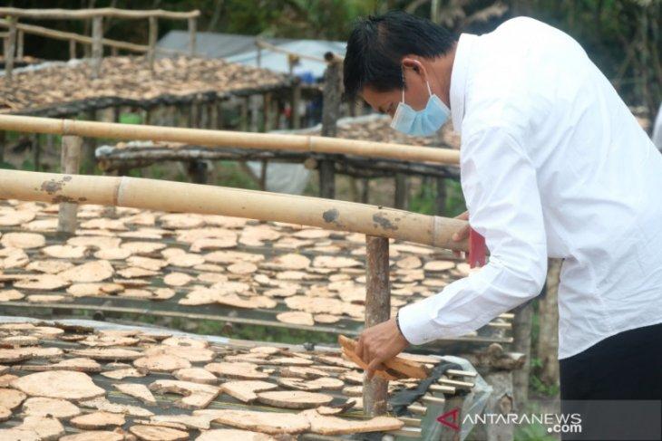 Kadistan Balangan targetkan 10 ton porang diekspor ke Jepang