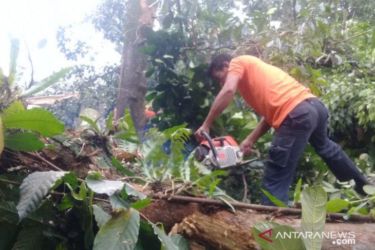 Empat rumah tertimpa pohon tumbang akibat angin kencang di Sumbar