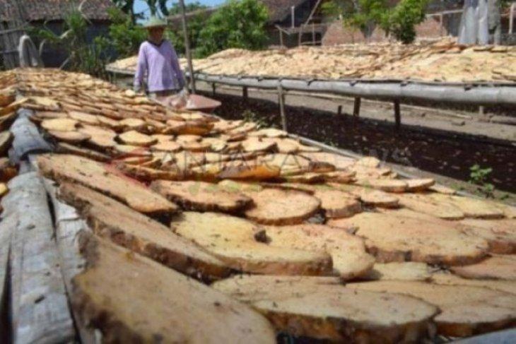 Lahan budi daya tanaman porang di Madiun terus bertambah