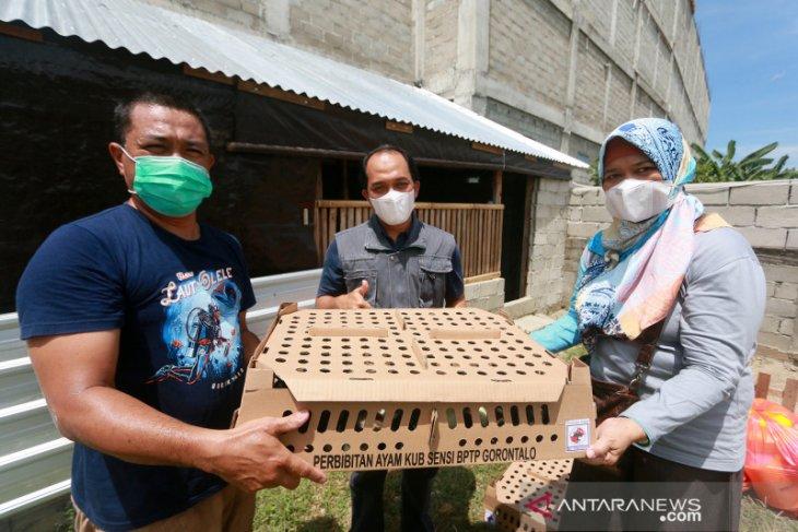 BPTP serahkan bantuan ayam kampung unggulan di Bone Bolango