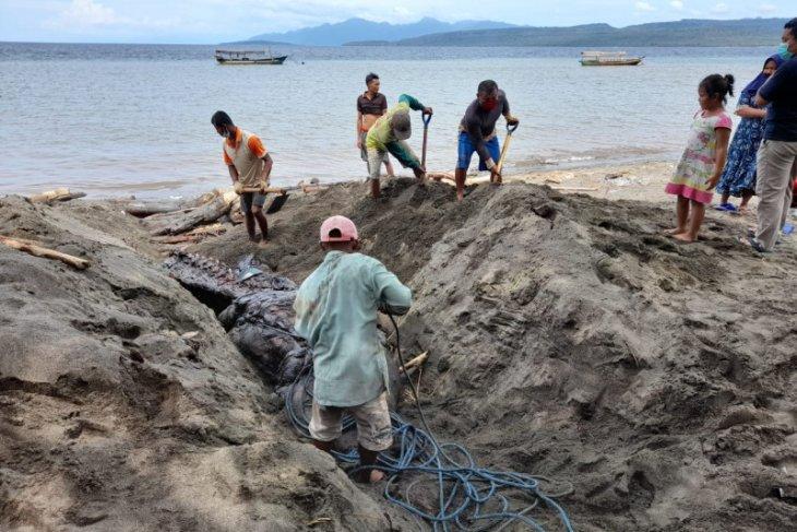 KKP tangani Paus Orca ditemukan mati terdampar di Banyuwangi