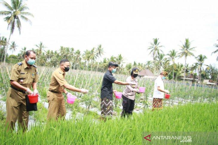 Badung jaga produktivitas petani selama pandemi
