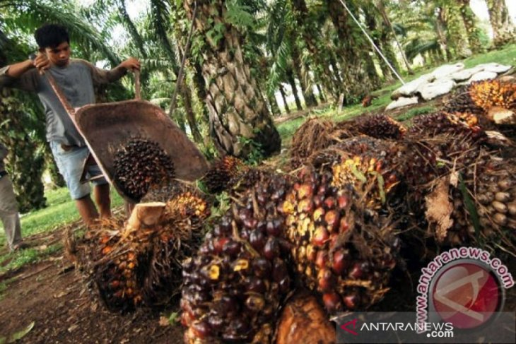 Riau: Palm oil price slides by Rp120.23/kg