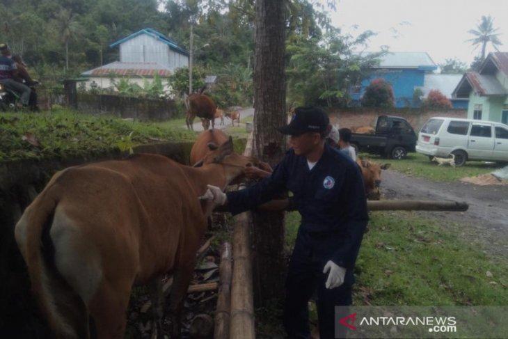 Rejang Lebong tak miliki stok vaksin jembrana untuk vaksinasi sapi
