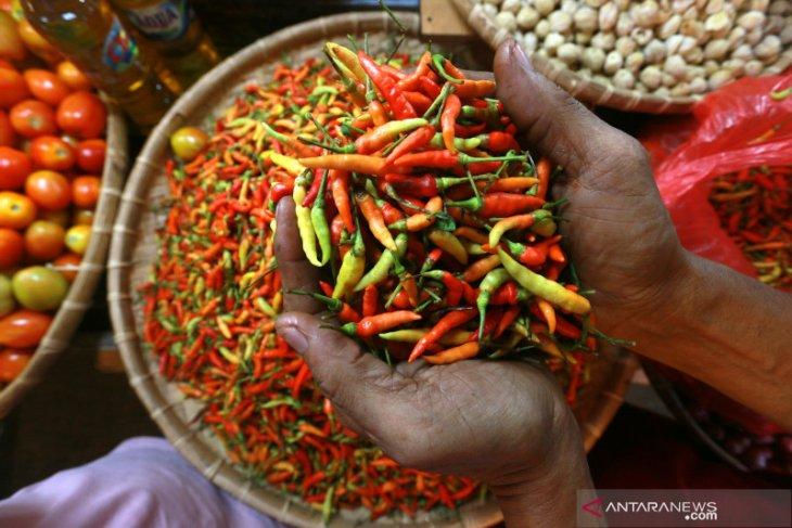 Harga cabai rawit di Gorontalo naik menjadi Rp90 ribu/kg