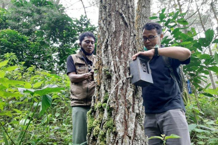 BKSDA lepas tiga kamera trap terpasang di lereng Gunung Wilis