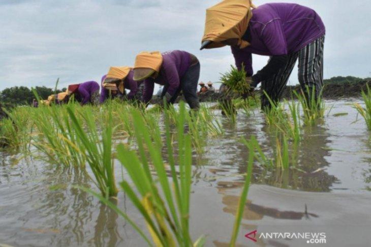 Pemkab Madiun anggarkan Rp2 miliar untuk subsidi pupuk petani kecil.