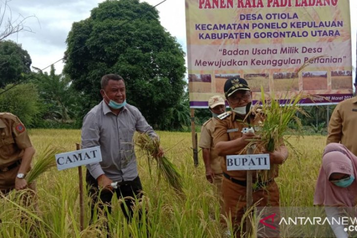 Bupati Gorontalo Utara sebut daerahnya lagi surplus beras