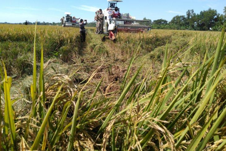 KTNA Karawang sebut petani tengah hadapi murahnya harga gabah