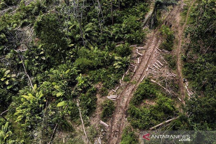 Produksi tebang kayu perhutani
