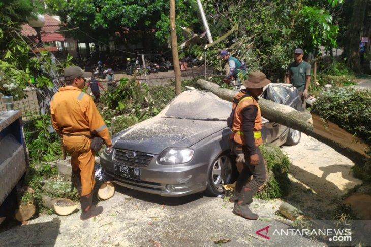 5 mobil rusak tertimpa pohon tumbang