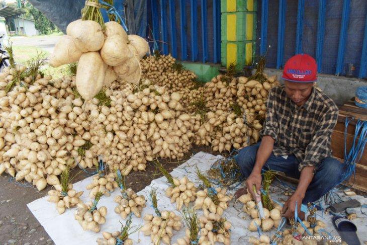 Penjual Bengkuang di Magetan